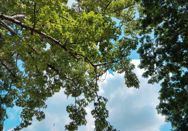 Bomen met hemel en wolken op achtergrond Vakantiebeeld nave stock foto's