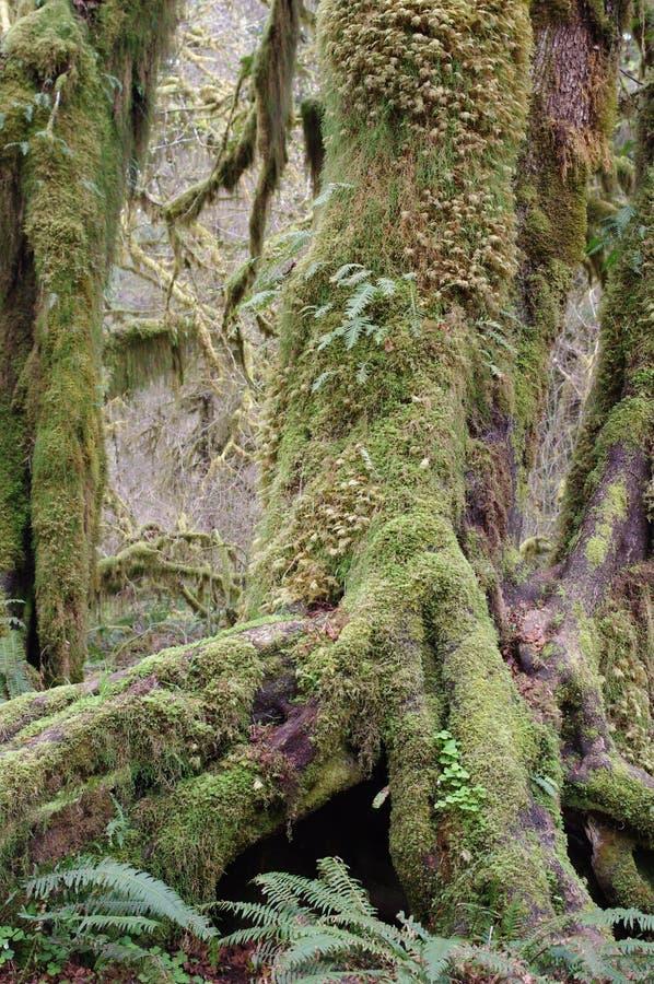 Bomen met mossen worden behandeld dat royalty-vrije stock afbeelding
