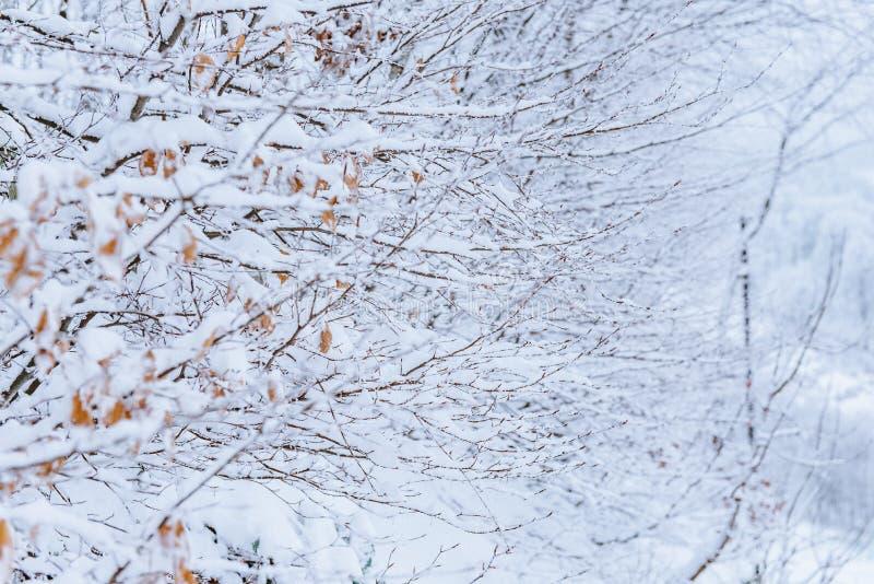 Bomen met Sneeuw, Pijnboombos en Takken worden behandeld met Sneeuw, Smog op de Winterinstallaties wordt behandeld, de Sneeuw Kou royalty-vrije stock foto