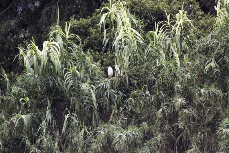 Bomen met vogelsnest stock afbeelding
