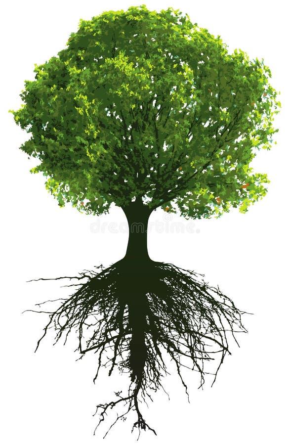 Bomen met wortels stock illustratie