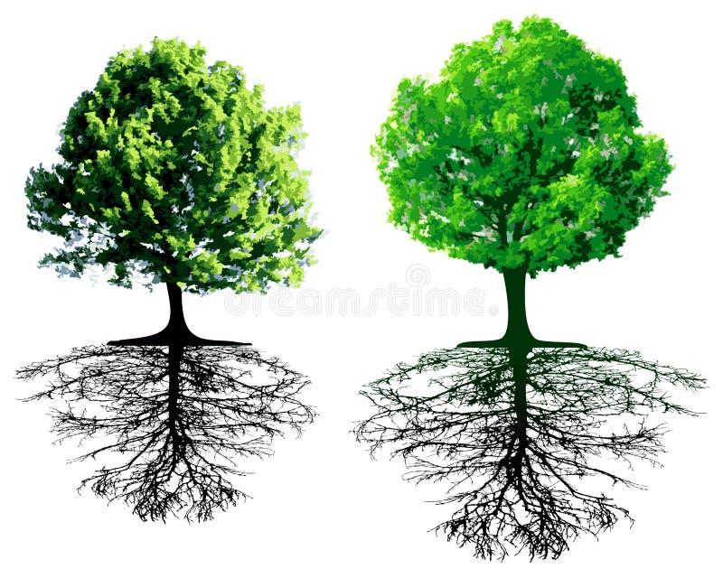 Bomen met wortels royalty-vrije illustratie