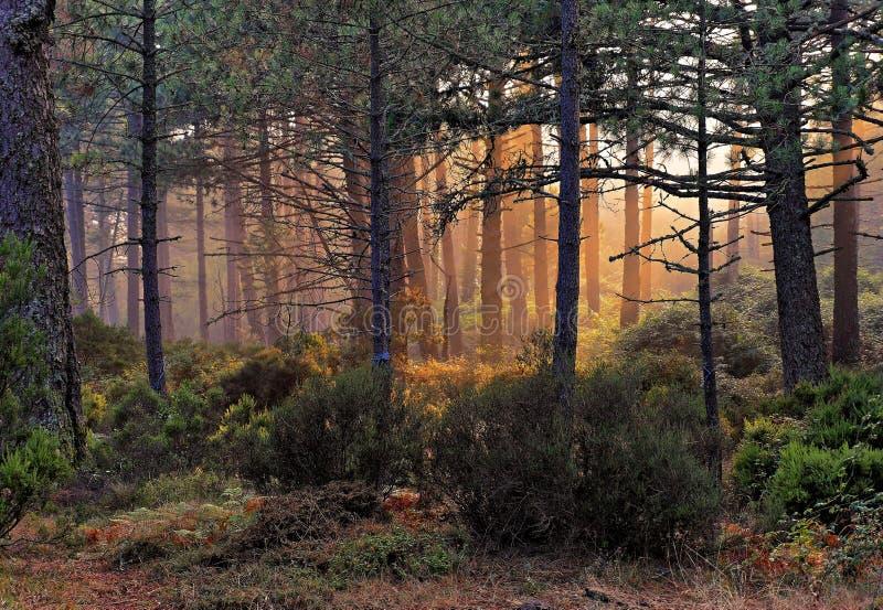 Bomen met zonlicht in Corsica royalty-vrije stock fotografie