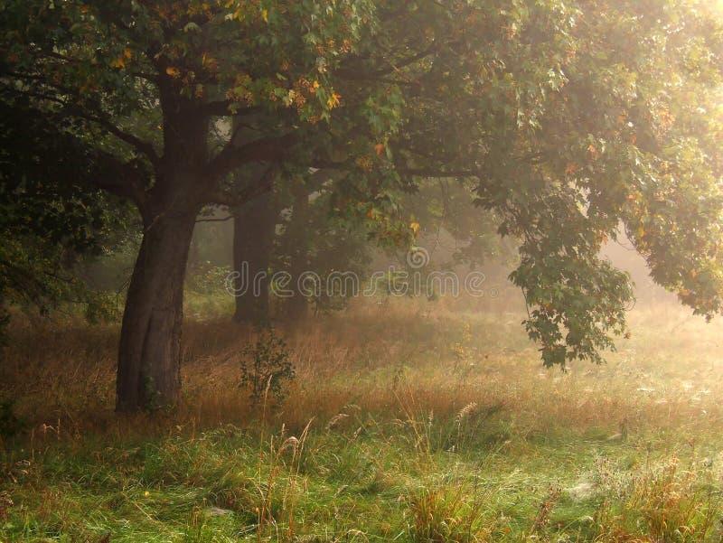 Bomen in mist royalty-vrije stock foto's