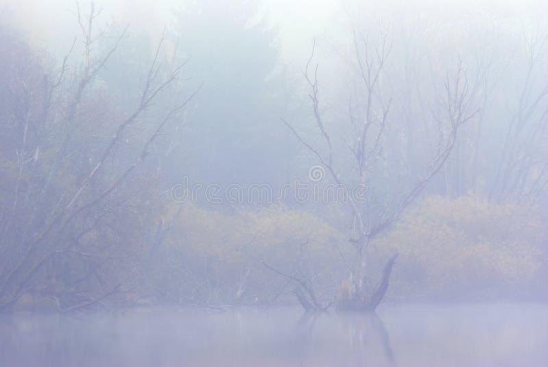 Bomen in mist stock foto