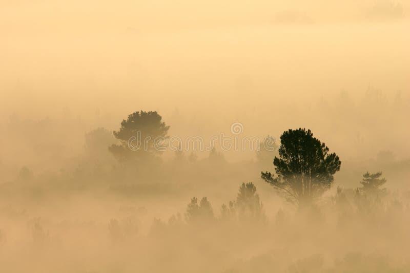 Bomen in mist royalty-vrije stock foto