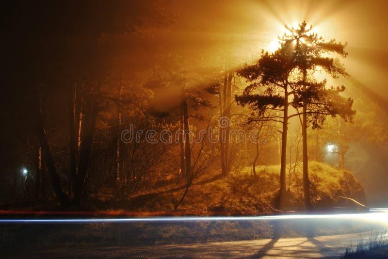 Bomen in mist stock foto's