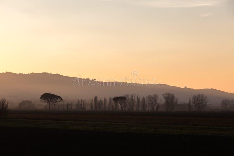 Bomen, mist en zonsondergang stock afbeeldingen