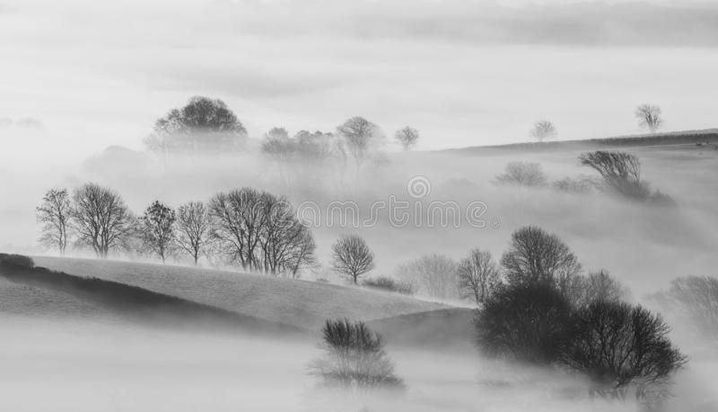 Bomen in Mist in het mooie platteland van Cornwall royalty-vrije stock afbeeldingen