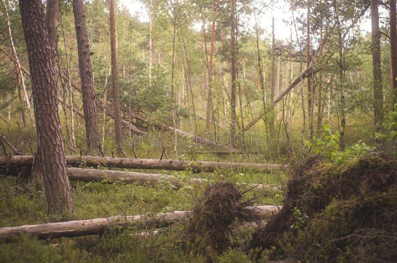 Bomen na het onweer royalty-vrije stock fotografie