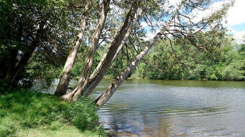 Bomen naast systeem van de schoonheidswellington canada grand river van Guelph Ontario Canada van de Snelheidsrivier het natuurli royalty-vrije stock afbeeldingen