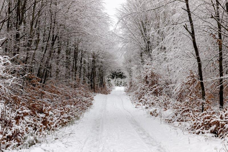 Bomen naast weg in de winter worden opgesteld die royalty-vrije stock afbeelding