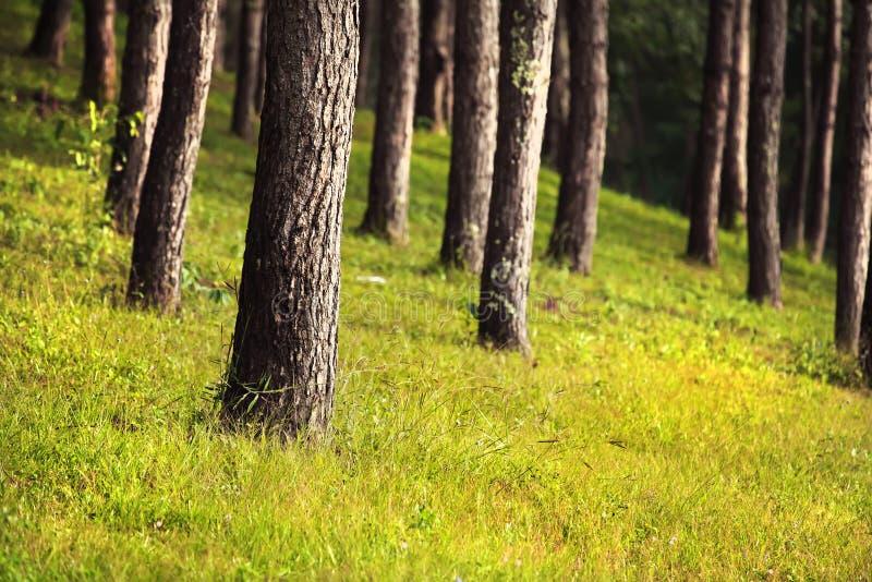 Bomen in natiepark stock afbeeldingen