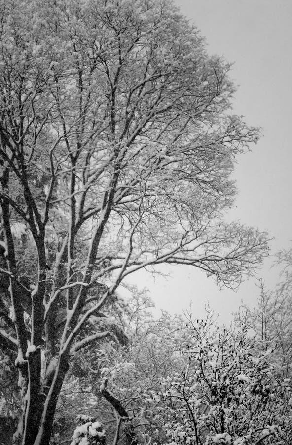 Bomen onder sneeuw, de winterlandschap royalty-vrije stock foto
