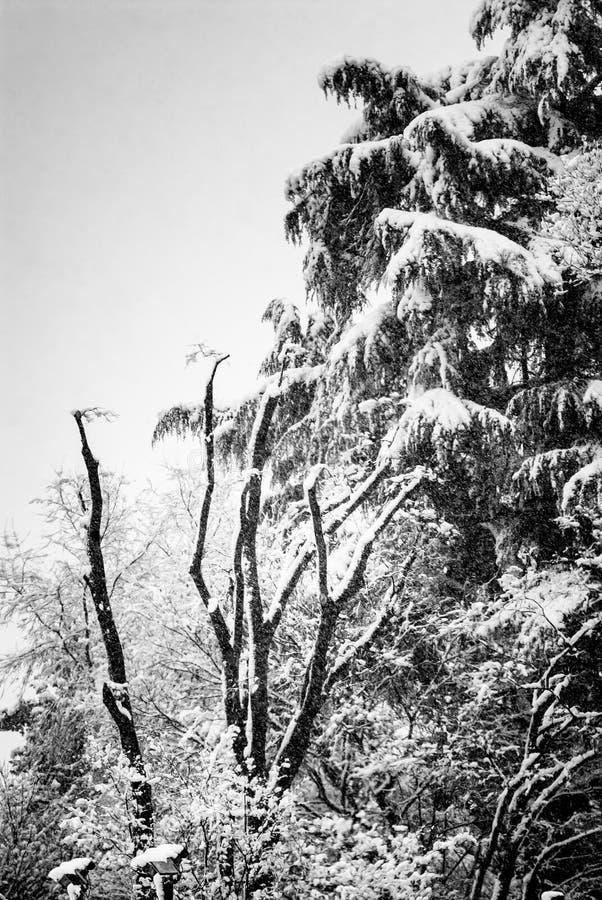 Bomen onder sneeuw, de winterlandschap royalty-vrije stock foto's