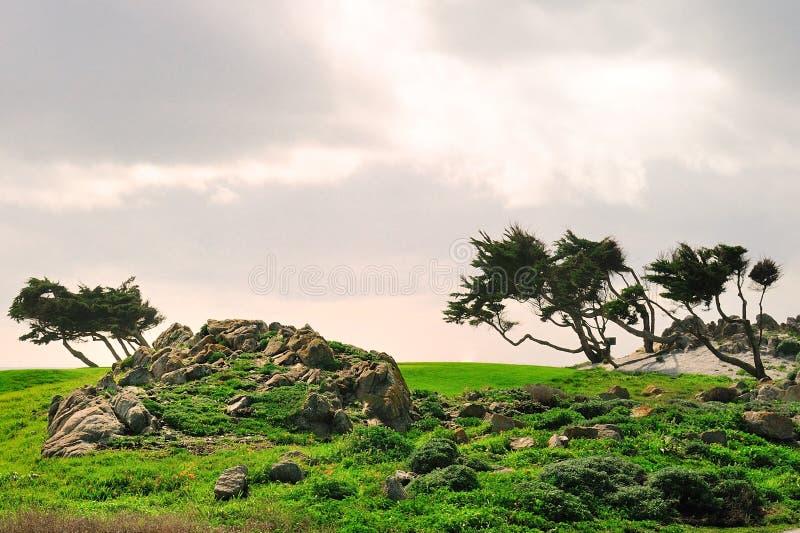 Bomen onder wind na onweer royalty-vrije stock foto's