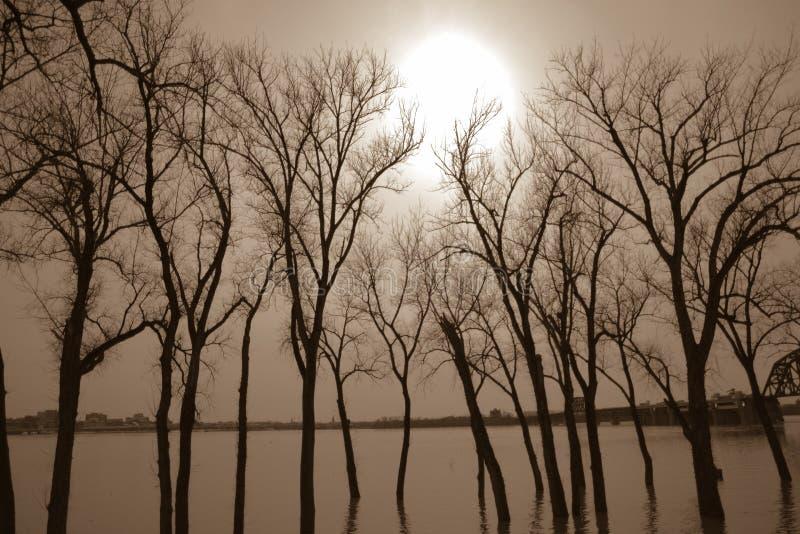 Bomen onderwater van vloed stock afbeelding