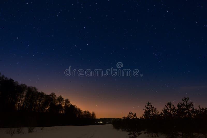 Bomen op achtergrond van de nacht sterrige hemel royalty-vrije stock afbeelding