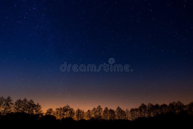 Bomen op achtergrond van de nacht sterrige hemel stock foto's