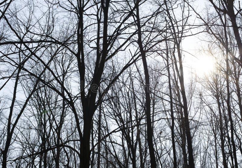 Bomen op de achtergrond van de hemel royalty-vrije stock afbeeldingen