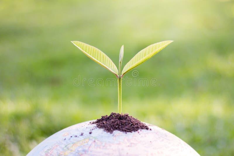 Bomen op de bol, milieubehoudsideeën, wereldenvi royalty-vrije stock afbeeldingen