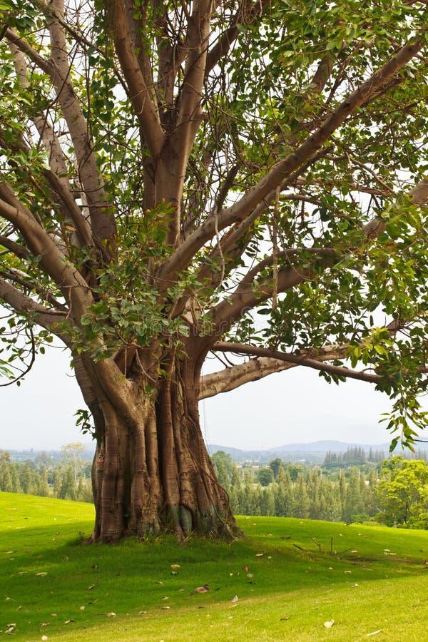 Bomen op de golfcursus stock afbeelding