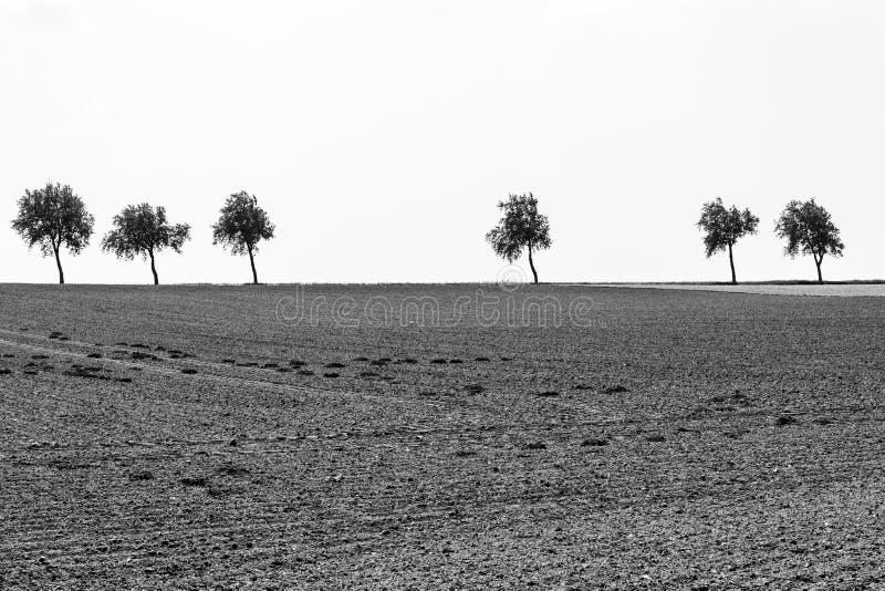 Bomen op de horizon royalty-vrije stock afbeelding