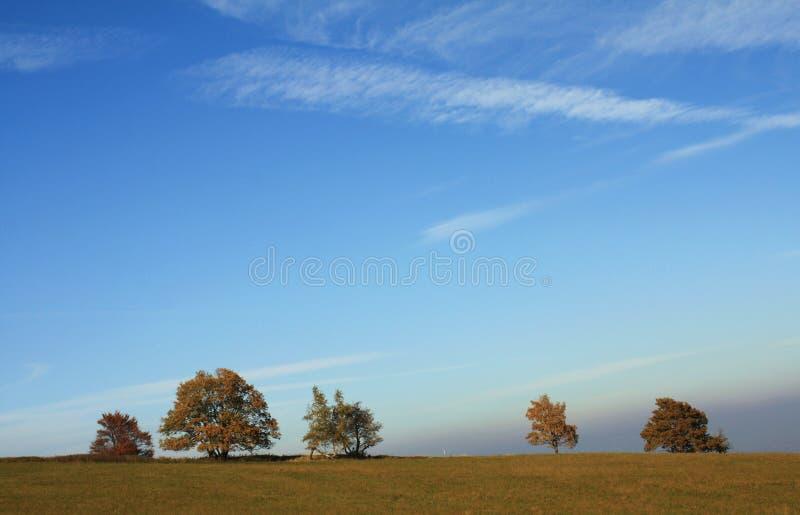 Bomen op de horizon royalty-vrije stock foto's