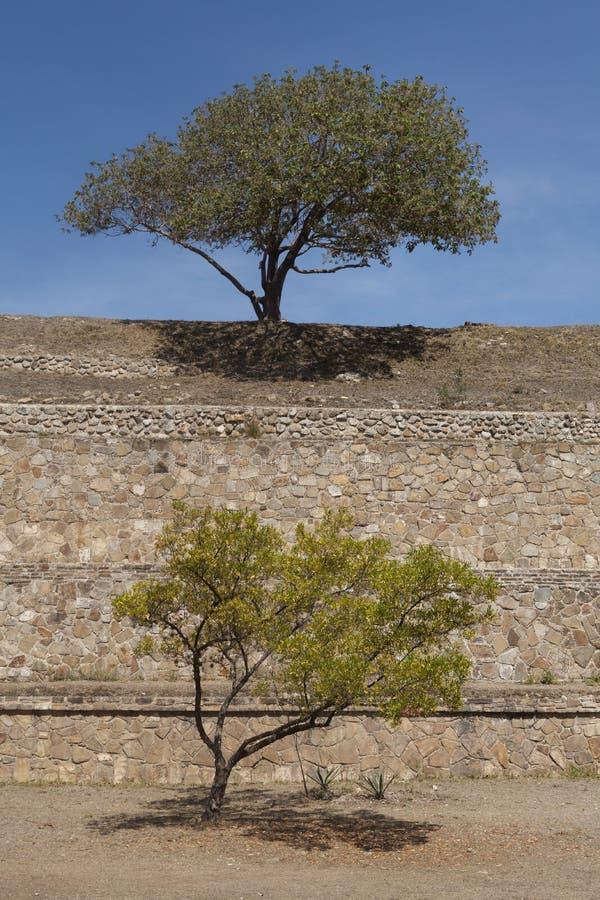 Bomen op de Mayan ruïnes van Palenque, Chiapas, Mexico stock afbeelding