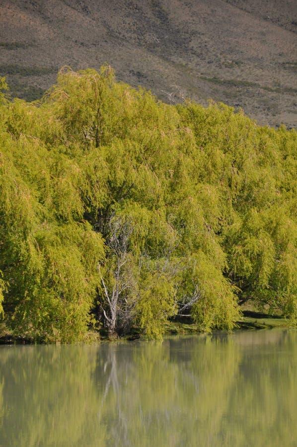 Bomen op de oever van het meer royalty-vrije stock foto