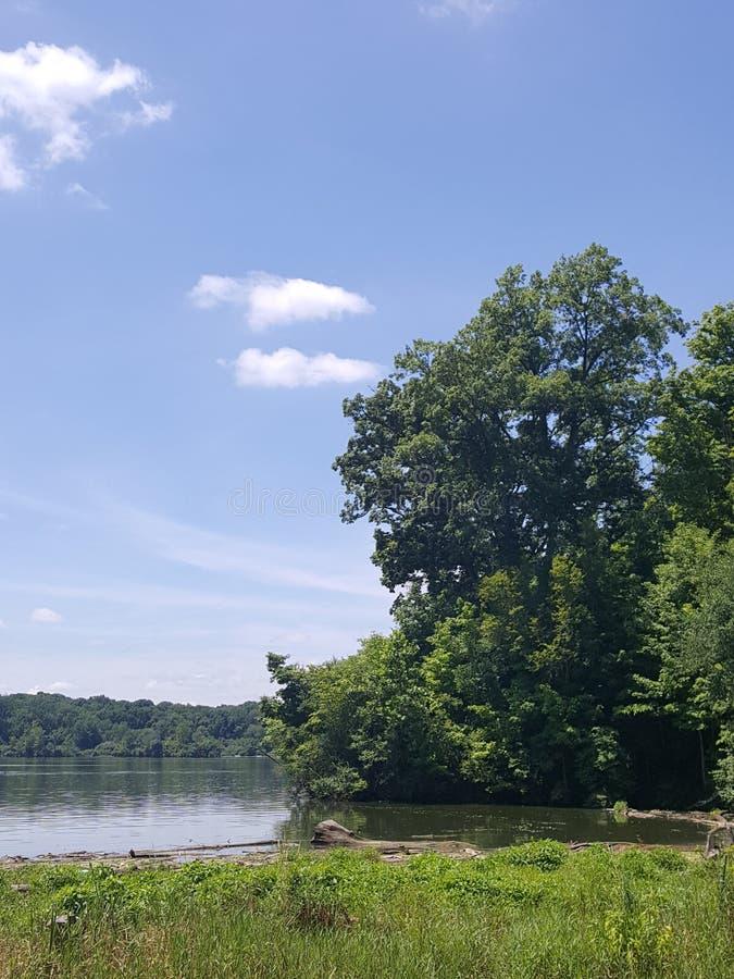 Bomen op de rand stock foto
