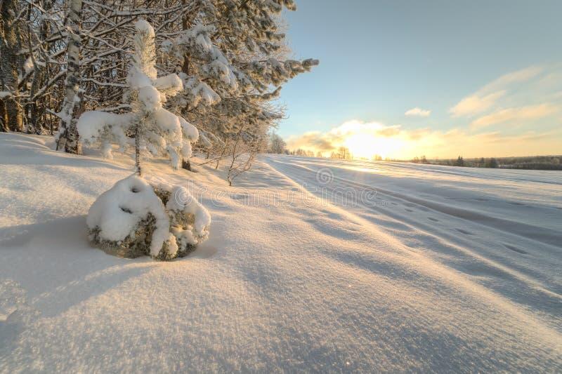 Bomen op de rand van een de winter snow-covered gebied stock foto's