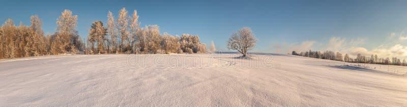 Bomen op de rand van een de winter snow-covered gebied royalty-vrije stock foto's