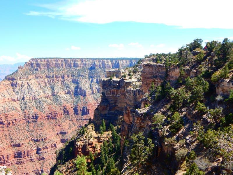 Bomen op de Rotsen van Grand Canyon stock foto's