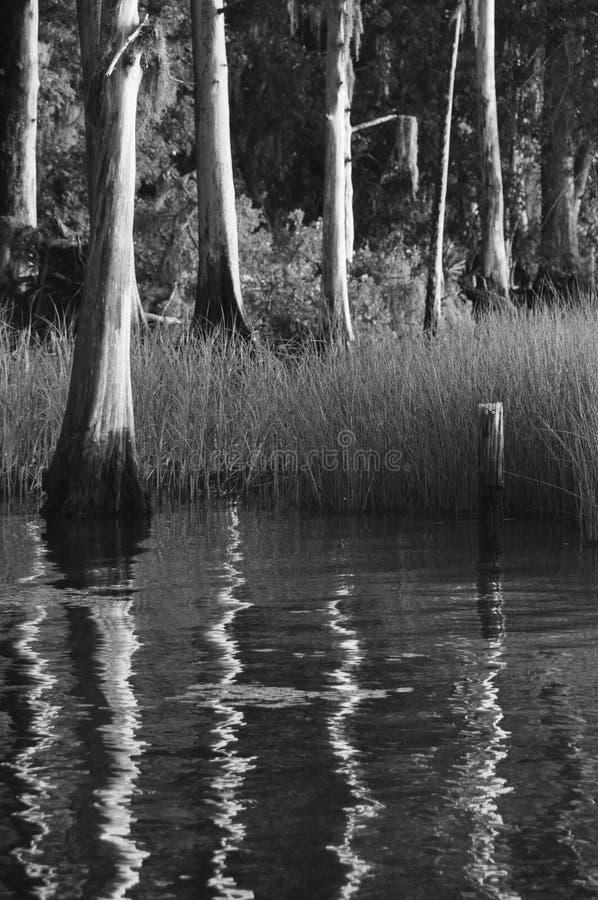 Bomen op de St Johns Rivier stock afbeelding