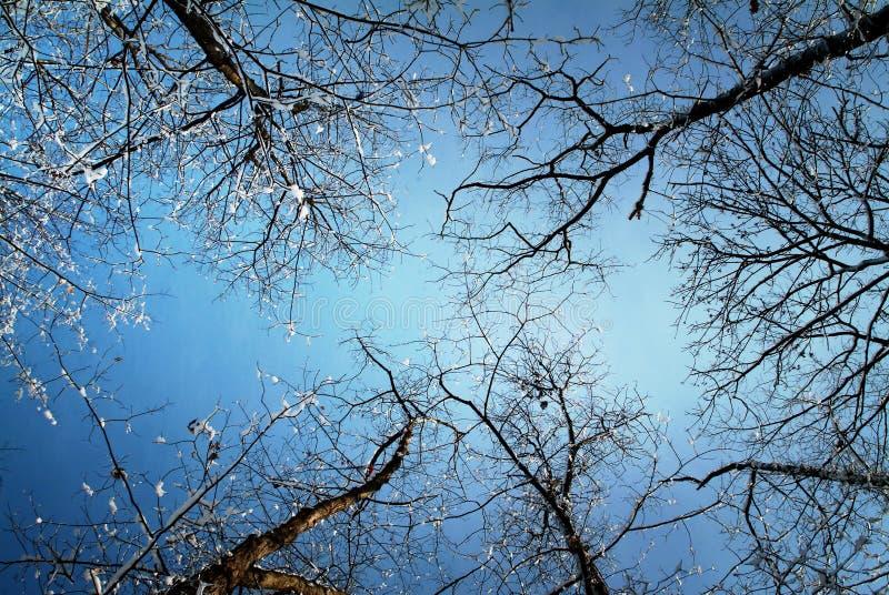 Bomen op de winter, mening van onderaan stock foto