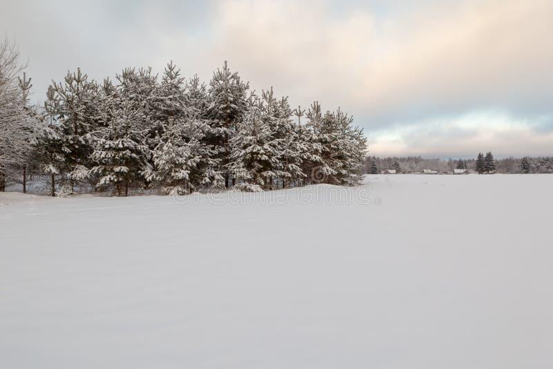 Bomen op een de winter snow-covered gebied. royalty-vrije stock foto
