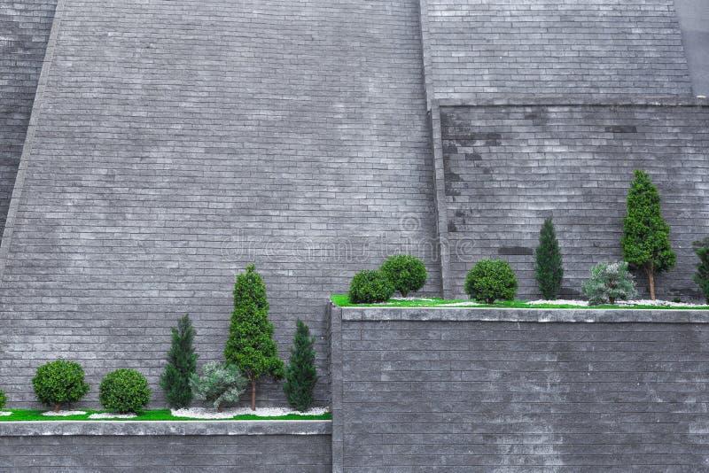 Bomen op een hoge bakstenen muur stock foto's