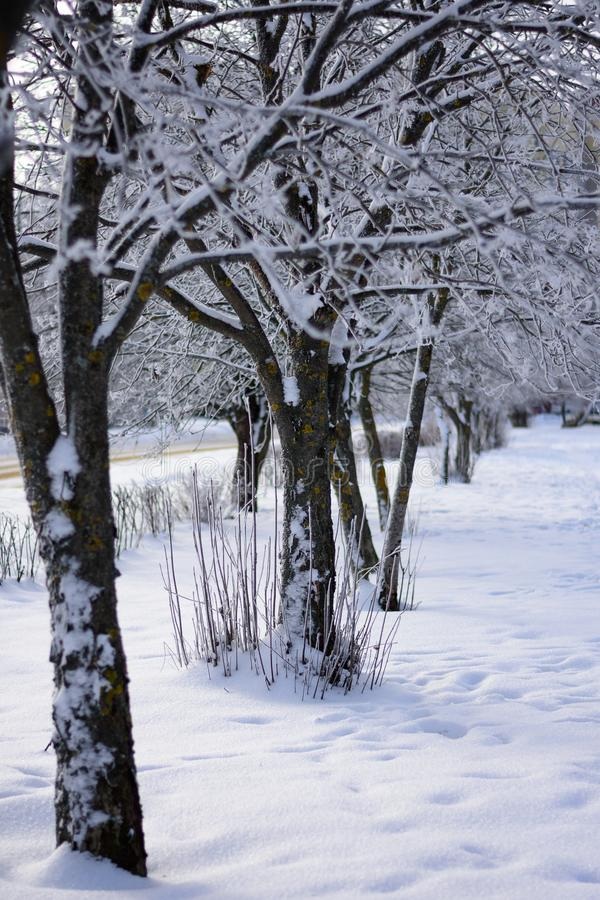 Bomen op een rij en behandeld met sneeuw stock afbeeldingen
