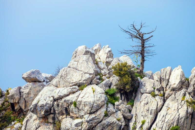 Bomen op een rots stock afbeelding