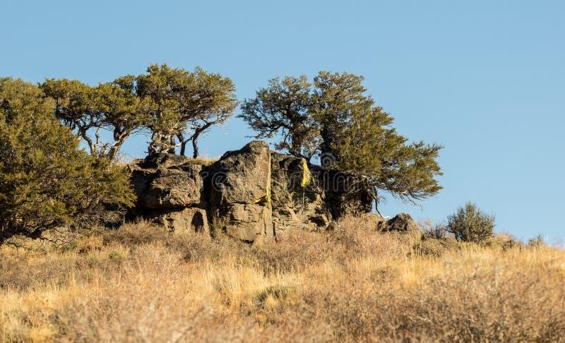 Bomen op een rotsachtige klip in Oregon royalty-vrije stock foto's