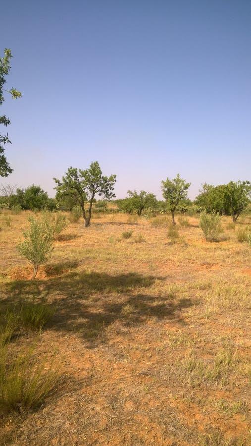 Bomen op gebied in een hete de zomerdag die wordt gevangen royalty-vrije stock afbeelding