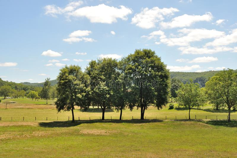 Bomen op gebieden royalty-vrije stock fotografie