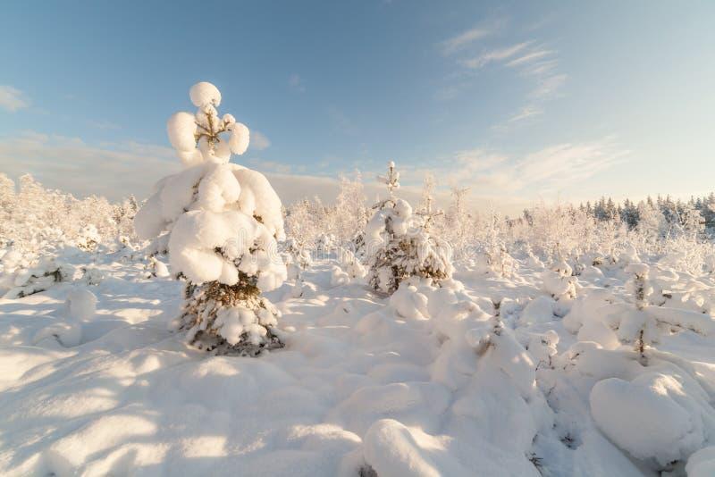Bomen op het gebied in de winter. royalty-vrije stock foto