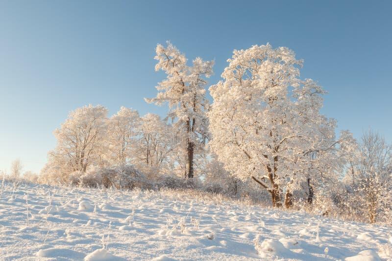 Bomen op het gebied in de winter. stock foto's