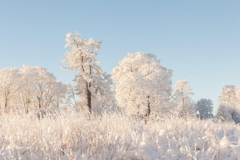 Bomen op het gebied in de winter. stock afbeeldingen