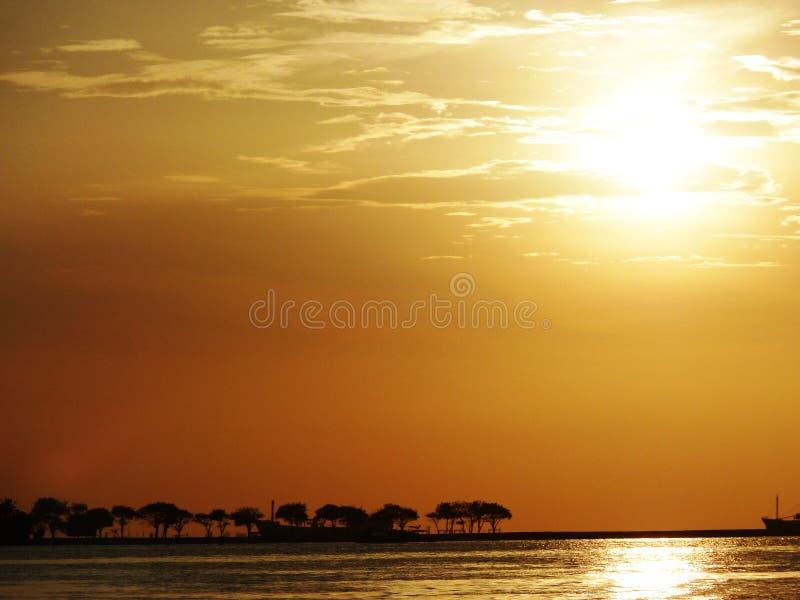 Bomen op Horizon royalty-vrije stock foto