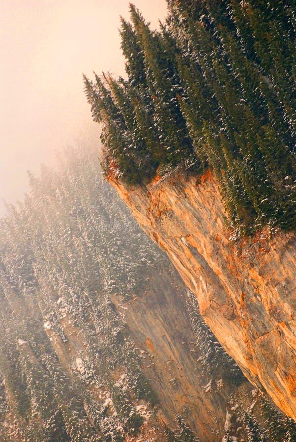 Bomen op klippenrand royalty-vrije stock afbeeldingen