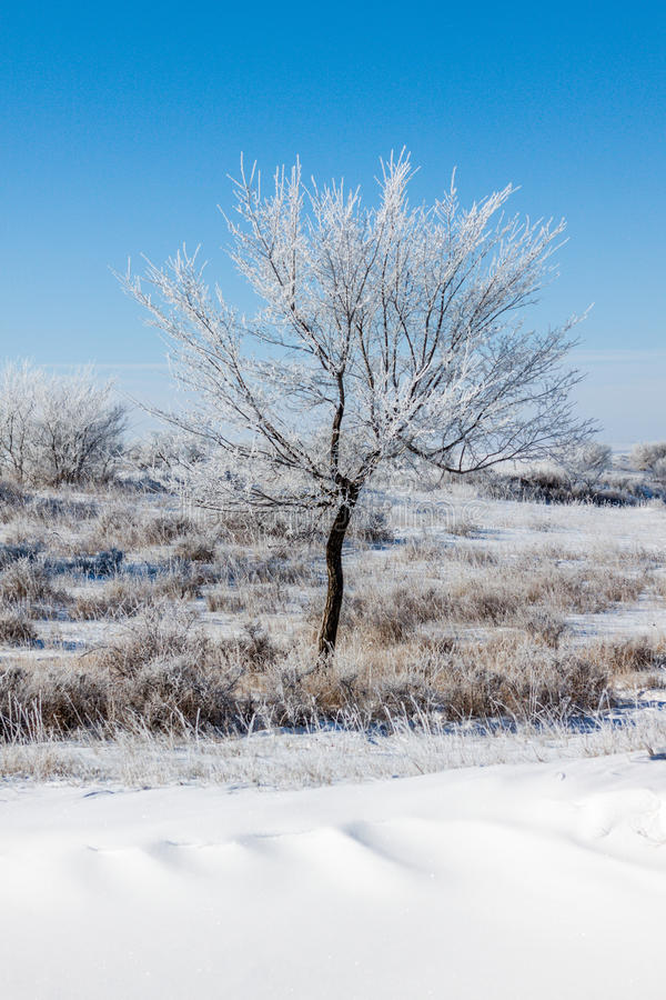 Bomen op snowfield stock fotografie