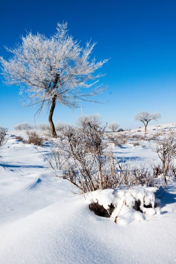 Bomen op snowfield royalty-vrije stock foto's